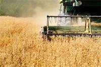 September Rye Harvest Notes