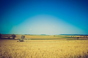 Wheat Production Report Overview